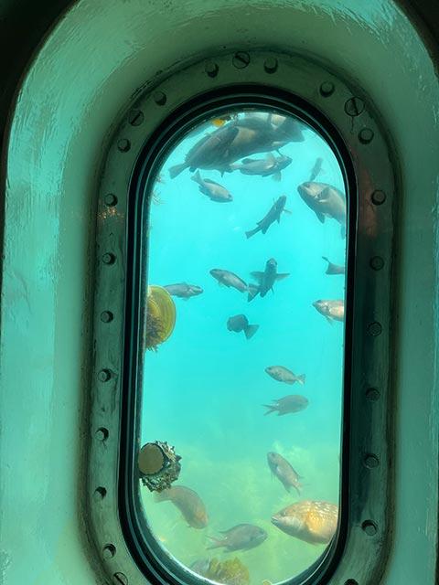 玄海海中展望塔の窓から