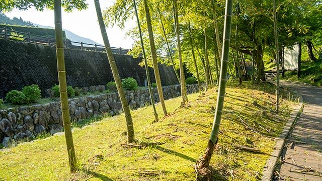 鍋島藩窯公園・大川内山の竹林