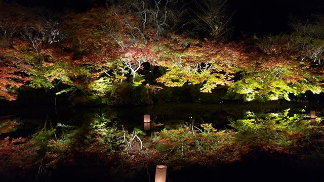 御船山楽園の夜の紅葉